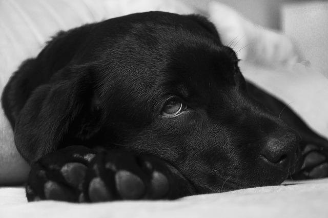 chien-épilepsie