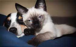 adoption-animaux-spa
