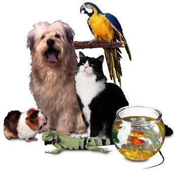 Animaux couvert par mutuelle animaux