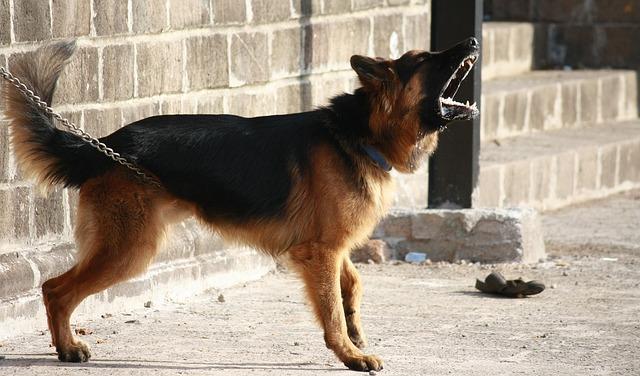 chien-traducteur