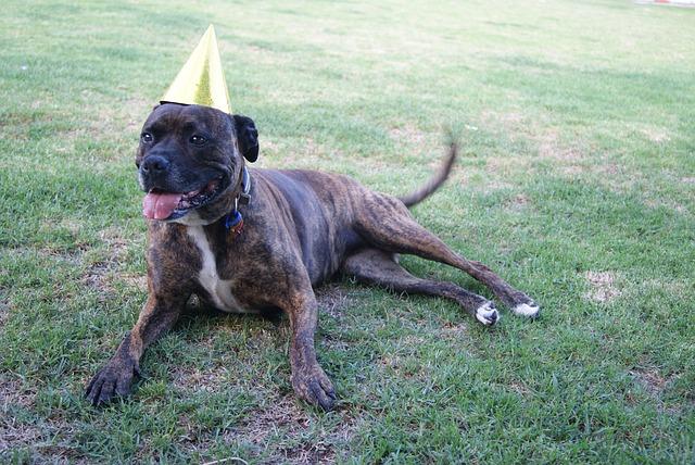anniversaire-chien