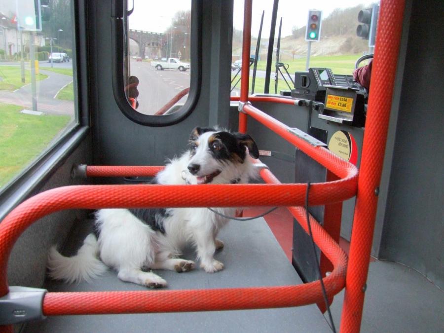 chien-voyage-bus