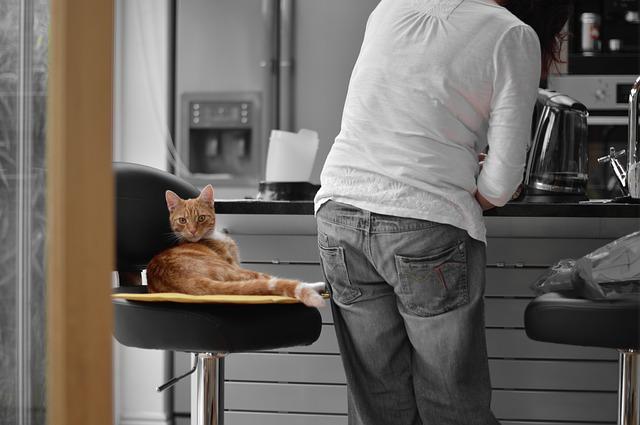 bar-à-chat