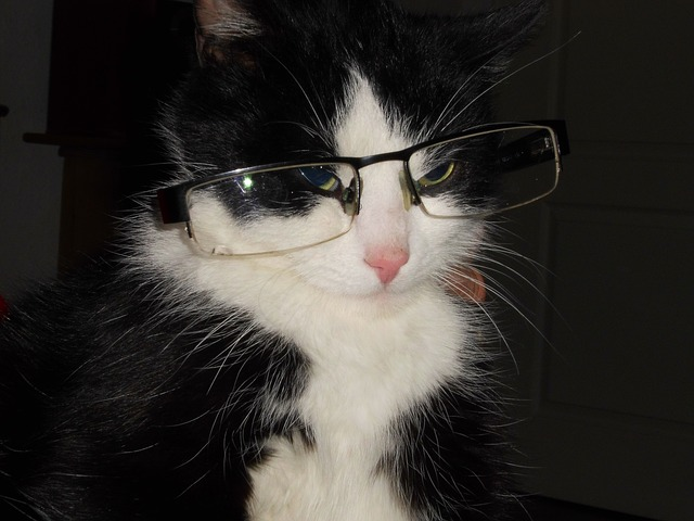 chat-espion