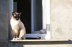 chat-fenêtre