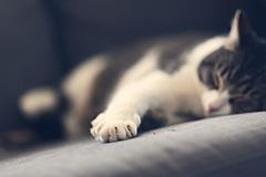 conseil-chat-griffes