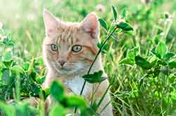 chat-herbe
