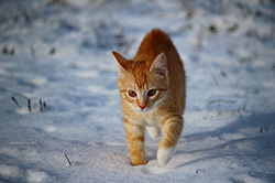 chat-neige-ressuscite