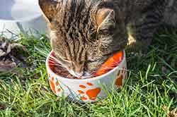 chat-nourriture