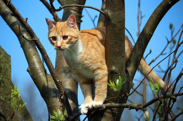 chat-nouvelle-zelande