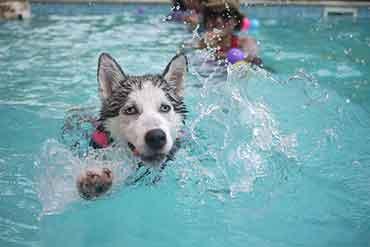 chien-eau-nager
