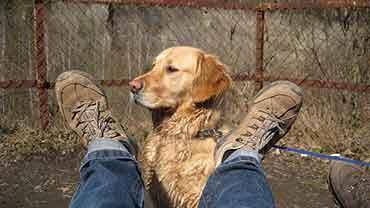 chien-guide-aveugle
