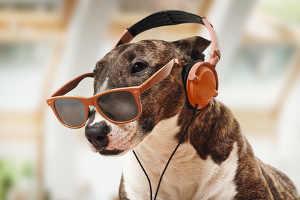 Effets de la musique sur les animaux