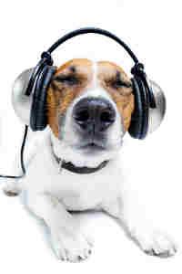 musique chien