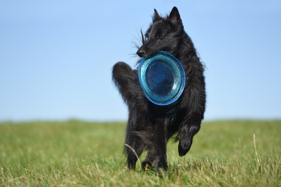 chien-tonique