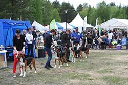 concours-canin