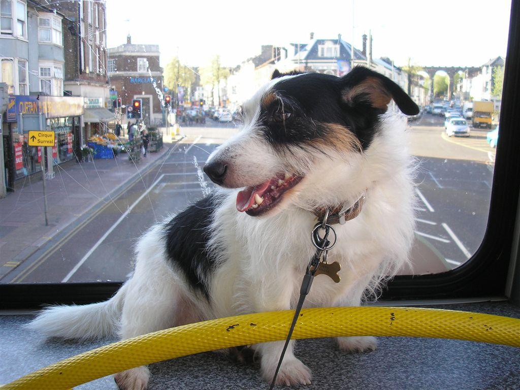 chien-bus