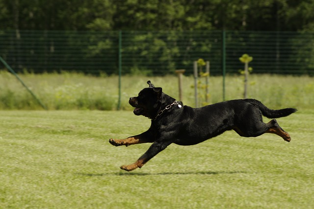 chien-exercice