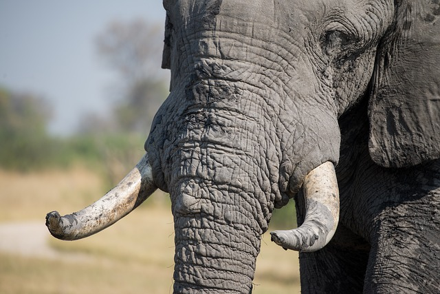 elephant-lutte-braconnage