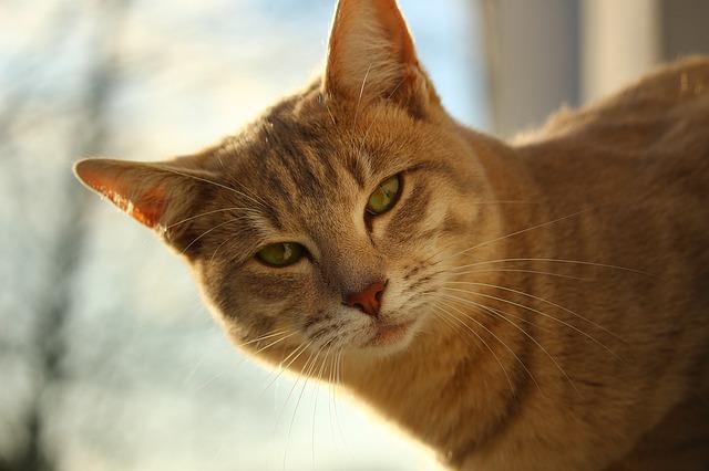 chat-torturé-marseille