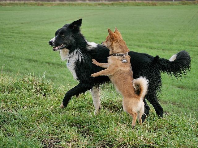 chiens-adoption
