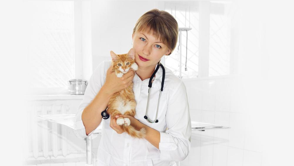 Mutuelle animaux - Vétérinaire pour chat