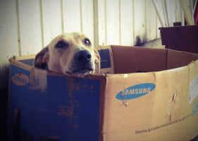 Niche pour chiens