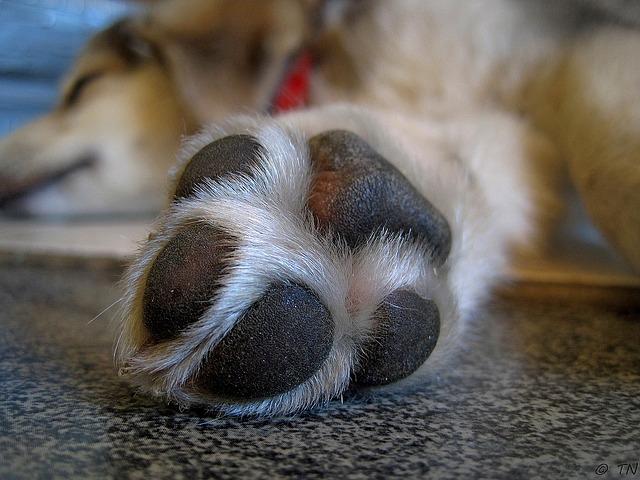 empreinte-chien