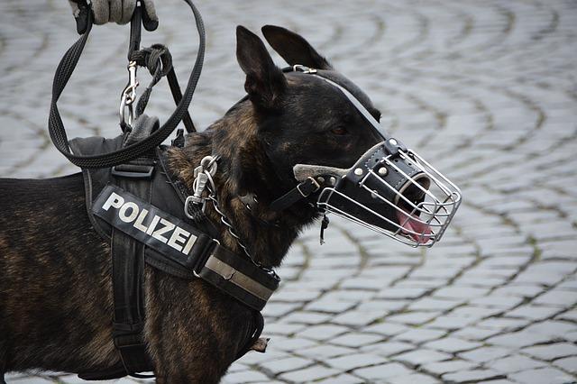 chien-policier