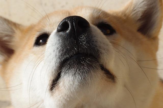 bodhi-chien-mannequin