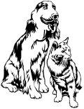 Souscription assurance chat et chien