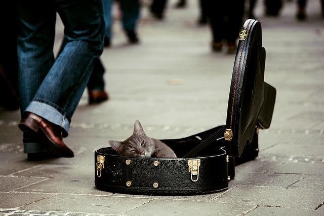 chat-abandonné