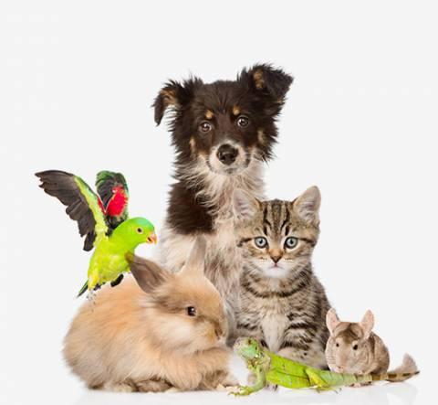 Fonctionnement assurance animaux