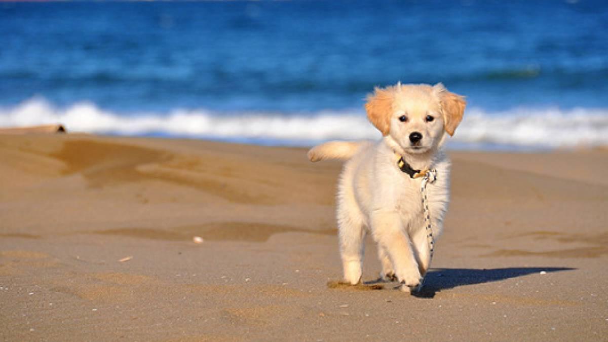 Les activit s d 39 t pour votre canid for Acheter piscine pour chien