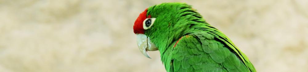 Bien choisir son perroquet