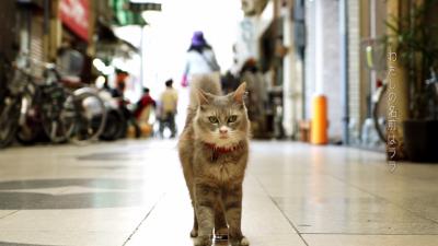 cat-street-view