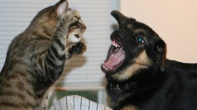 tara-attaque-chien