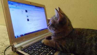 chat-internet