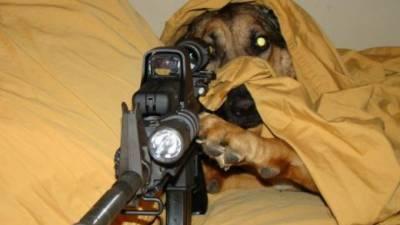 chien-fusil