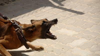 chien-méchant