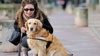 chien-handicapé-peta