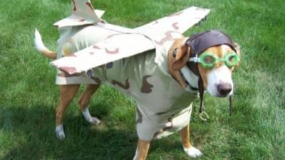 chien-avion