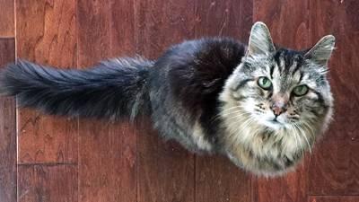 chat-vieux-corduroy