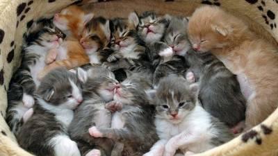 nombre-chats-suisse