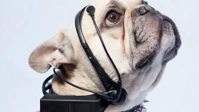 traducteur-chien