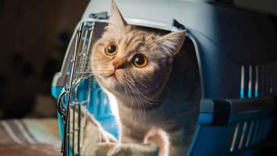 chat-en-cage