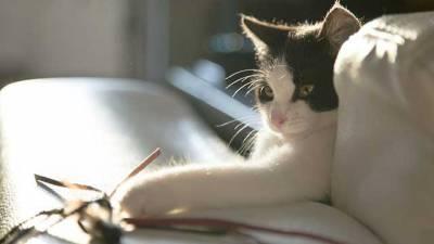 chat-jouet