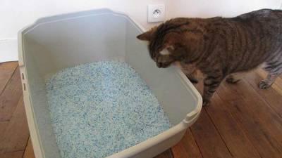 nettoyer-litière-chat
