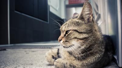 mutuelle animaux comparateur gratuit d assurance chien chat et nac. Black Bedroom Furniture Sets. Home Design Ideas