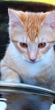 chat-eau